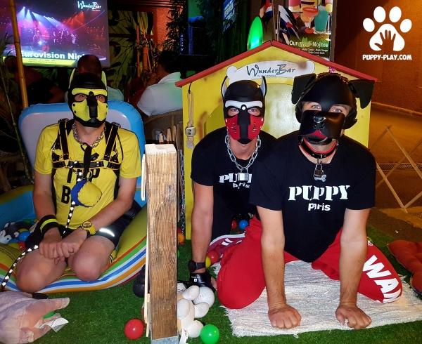 Photos : Puppies Playground