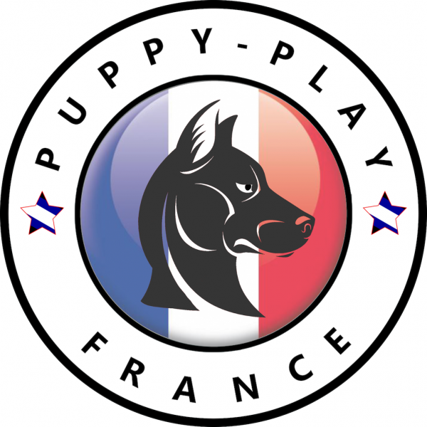 Article : Puppy Play France