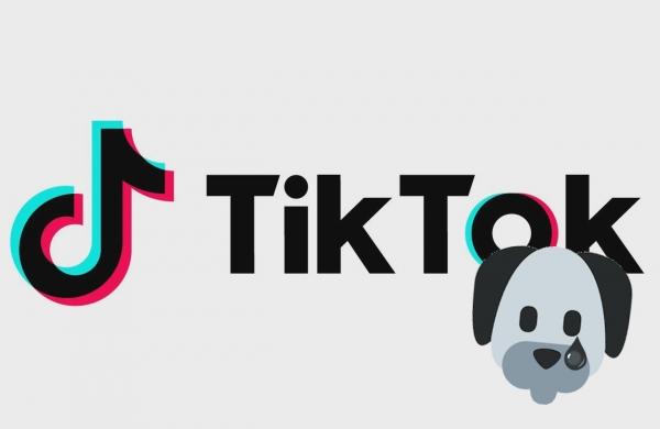Article : Un jeune homme puppy se suicide par cyberintimidation sur l'application TikTok